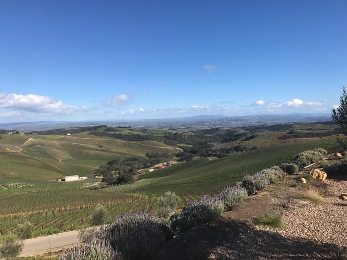 daou winery views